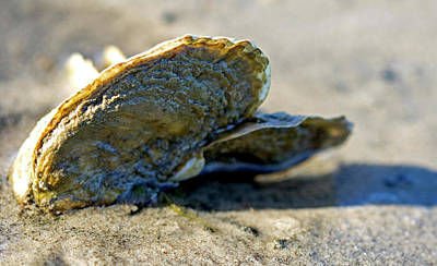 Photograph - Oysters By The Bay by Jean Haynes