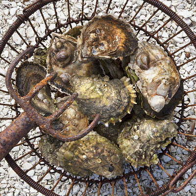 Photograph - Oysters by Charles Harden