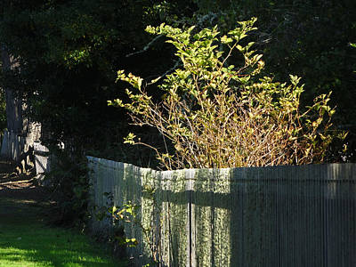Photograph - Oysterville Fenceline by Jacqueline  DiAnne Wasson