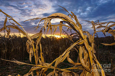Photograph - Ozarks Harvest by Jennifer White
