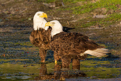 Ozzie Photograph - Ozzie And Harriet At The Pond by David Eppley
