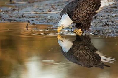 Ozzie Photograph - Ozzie by David Eppley