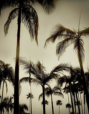 Photograph - P Is For Palms by Joseph Hollingsworth