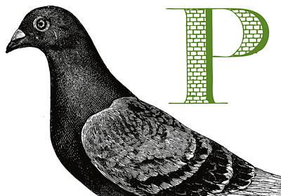 Animal Alphabet Digital Art - P Pigeon by Thomas Paul