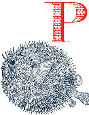 P Puffer Fish Art Print by Thomas Paul