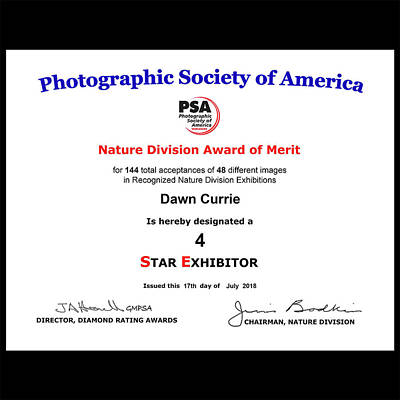 Photograph - P S A Nature Four Star Exhibitor by Dawn Currie