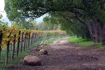 Photograph - Paarl Landscape Number Nine by Harvey Barrison