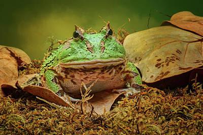 Photograph - Pac Man - Frog by Nikolyn McDonald