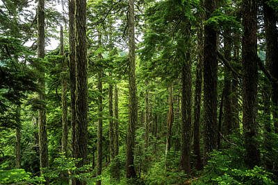 Mountain View Photograph - Pacific Northwest Forest by Pelo Blanco Photo