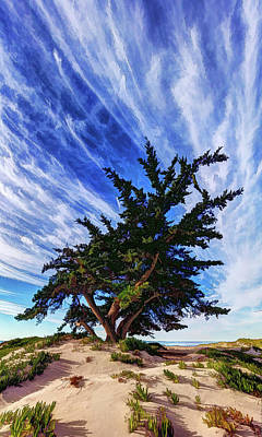 Digitally Manipulated Photograph - Pacific Beach Juniper by ABeautifulSky Photography by Bill Caldwell