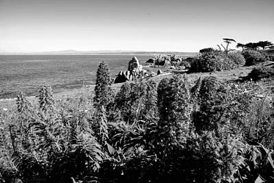Photograph - Pacific Grove Beauty Two B And W by Joyce Dickens