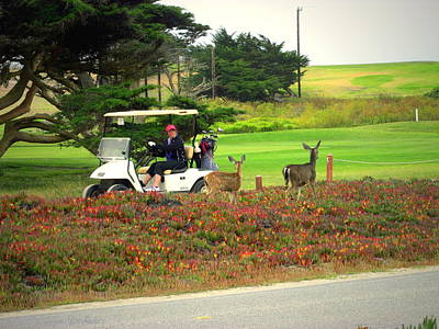 Photograph - Pacific Grove Deer And Golf Cart by Joyce Dickens