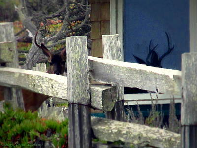 Photograph - Pacific Grove Deer And His Reflection by Joyce Dickens