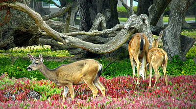 Photograph - Pacific Grove Deer Family Two Close Up by Joyce Dickens