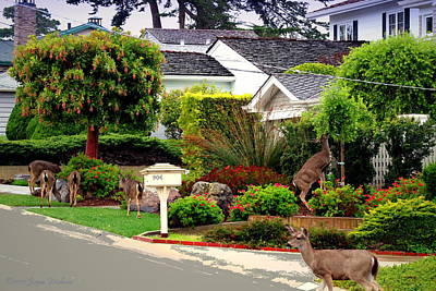 Photograph - Pacific Grove Deer by Joyce Dickens