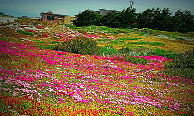Photograph - Pacific Grove Full Bloom by Joyce Dickens