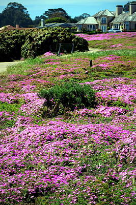 Photograph - Pacific Grove In Bloom by Joyce Dickens