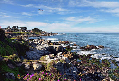 Photograph - Pacific Grove Shoreline by Gina Savage