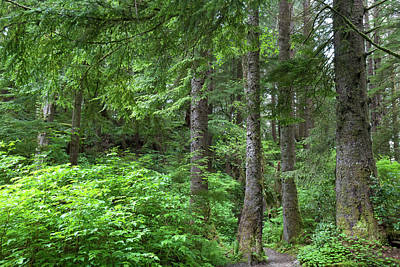 Photograph - Pacific Northwest Forest by Cascade Colors