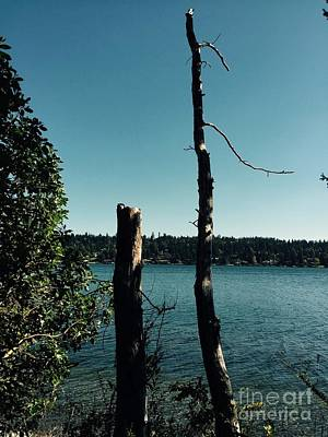 Photograph - Pacific Northwest Landscape by LeLa Becker