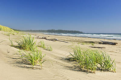 British Columbia Photograph - Pacific Ocean Shore On Vancouver Island by Elena Elisseeva
