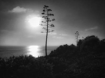 Photograph - Pacific Ocean Sunset by Dan Miller