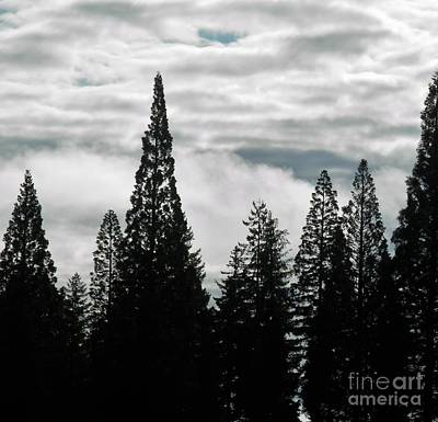 Photograph - Pacific Pines by L Cecka
