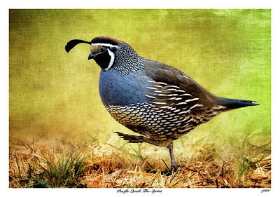 John Williams Digital Art - Pacific Quail The Sprint by John Williams