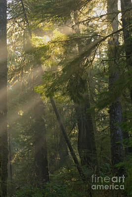Photograph - Pacific Rim Misty Sunbeams by Adam Jewell