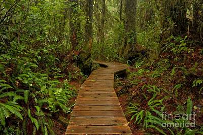Photograph - Pacific Rim National Park Boardwalk by Adam Jewell