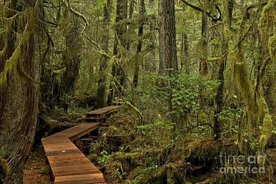 Photograph - Pacific Rim Park Boardwalk by Adam Jewell