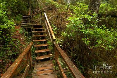 Photograph - Climbing Through The Pacific Rim Rainforest by Adam Jewell