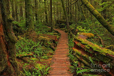 Photograph - Pacific Rim Rainforest Landscape by Adam Jewell