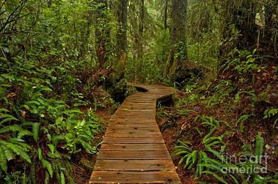 Photograph - Pacific Rim Rainforest Trail by Adam Jewell