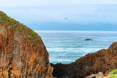 Photograph - Pacific View by Dee Browning