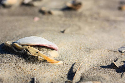 Photograph - Pac Man Shell On Beach by Joni Eskridge
