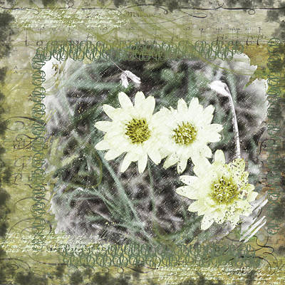 Digital Art - Package Of Three by Nadine Berg