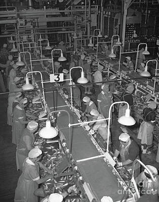 Photograph - Packing Tables At Del Monte Packing  California Packing Corporation 1949 by California Views Mr Pat Hathaway Archives