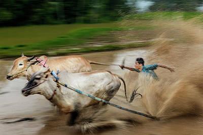 Photograph - Pacu Jawi Bull Race Festival by Pradeep Raja Prints