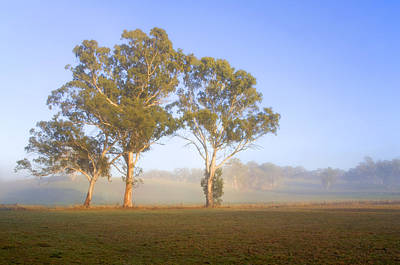First Light Photograph - Paddock Sunrise by Mike  Dawson