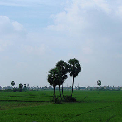 Photograph - Paddy Fields Near Anantapur, Andhra Pradesh, India by Iqbal Misentropy