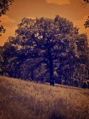 Photograph - Pagan Tree by Kyle West