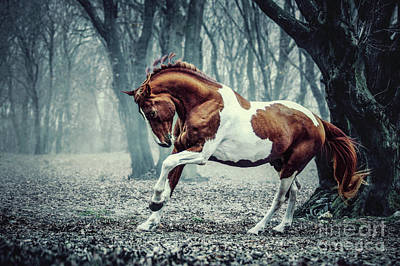 Photograph - Paint Horse In The Frozen Forest by Dimitar Hristov