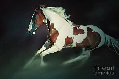 Photograph - Paint Horse Running by Dimitar Hristov