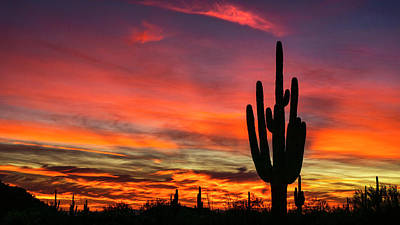 Photograph - Paint The Sonoran Skies With Color  by Saija Lehtonen