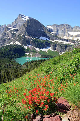 Photograph - Paintbrush Above Grinnell Lake by Jack Bell