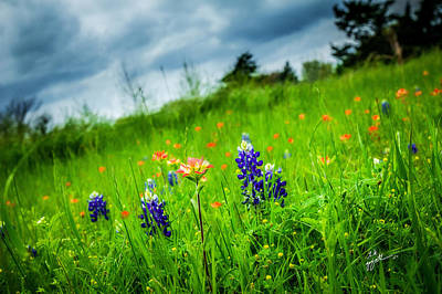 Photograph - Paintbrush And Bonnets by TK Goforth