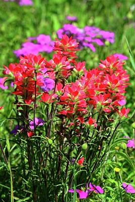 Photograph - Paintbrush And Phlox Wildflowers In The Hill Country by Lynn Bauer