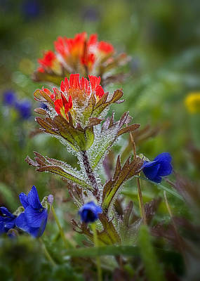 Photograph - Paintbrush In The Mist by Robert Potts
