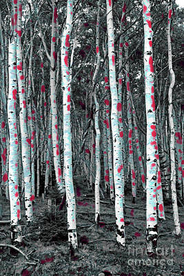 Photograph - Painted Aspen by John Stephens